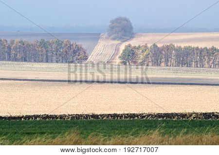 Agricultural Landscape After Harvesting