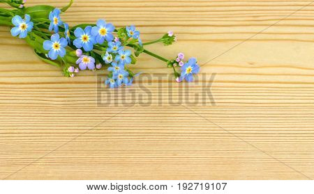 Background wood with forget me not flowers. Copy space for text