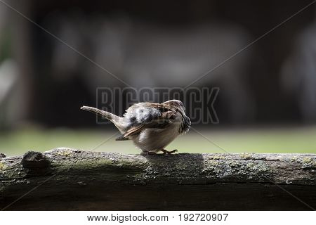 Sparrow perched on the first rays of sun