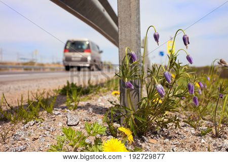 Spring flowers at roadside under the guardrail