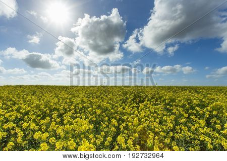 Agricultural landscape on a sunny day. Environment friendly electricity production renewable energy concept
