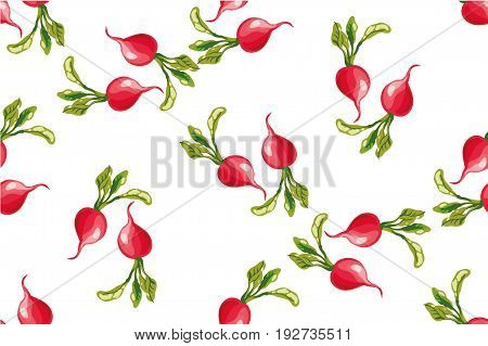 Seamless pattern of radishes isolated on white vector