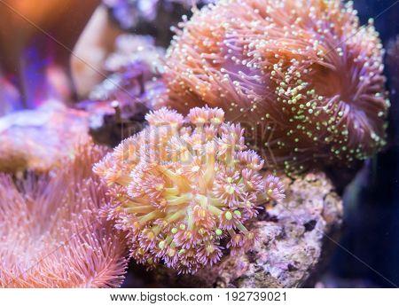 Coral Reef in Sunlightmarine aquarium.