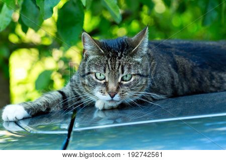 grey cat with green eyes on green background