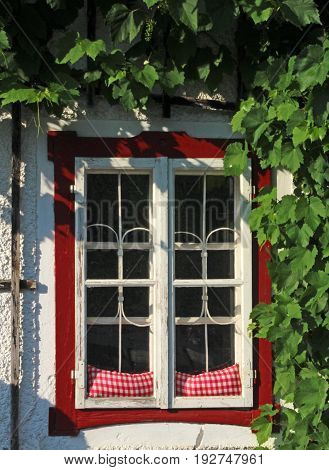 transom window of an old Austrian house surrounded by wine tendrils
