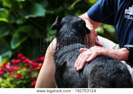 Black dog in garden being petted by owner