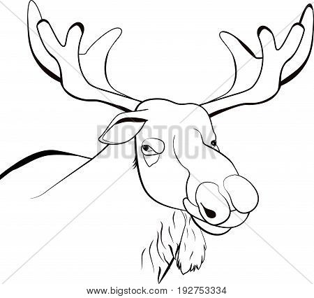 Moose or Eurasian elk line scetch illustration isolated on white