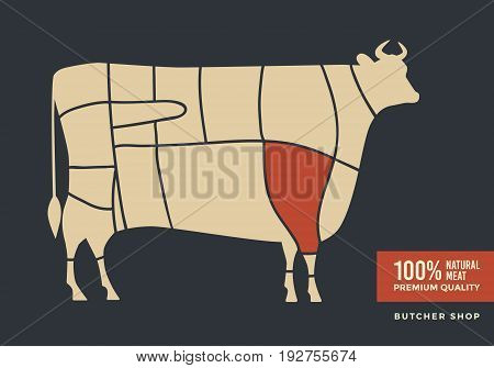 Cuts of beef. Poster with picture of cow, for butcher shop, farmer market.  Vector illustration.