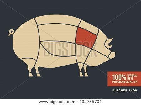 Cuts of pork. Poster with picture of pig, for butcher shop, farmer market. Vector illustration.