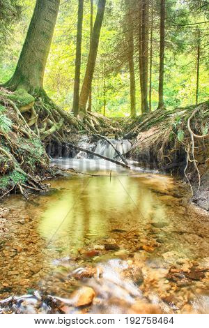 Nice Forest River