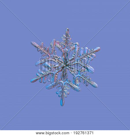 Snowflake isolated on uniform blue background. Macro photo of real snow crystal: large stellar dendrite with elegant shape, hexagonal symmetry, long fragile arms with side branches and glossy surface.