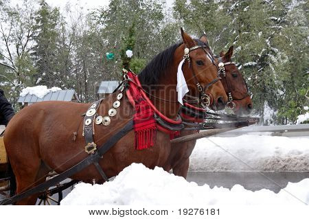 Two Horse-driven carriage. Zakopane-Poland