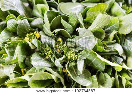 Close-up Of Healthy Organic Choy Sum Leafy Vegetable