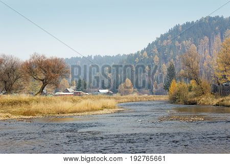 Autumn Willow By The River. Colorful Trees. Siberian Forest.