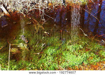 swamp marsh mire wetland fen morass quagmire slough marshland