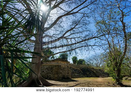 Trees and Mayan ruins of the ancient city of Ek Balam near Valladolid Mexico