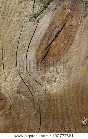 background image of cut timber with wood grain and knots
