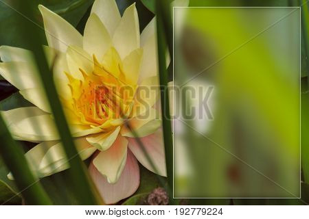 template with flowers for a greeting card calendar