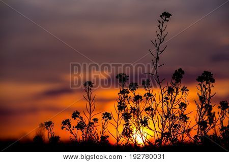 view through abstract grass on sunset