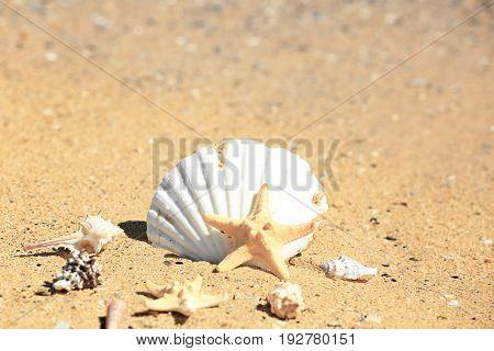 Shells and starfish on sand at sea shore. Vacation concept