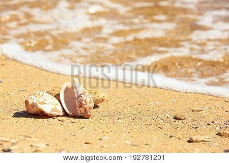 Shells on sand at sea shore. Vacation concept