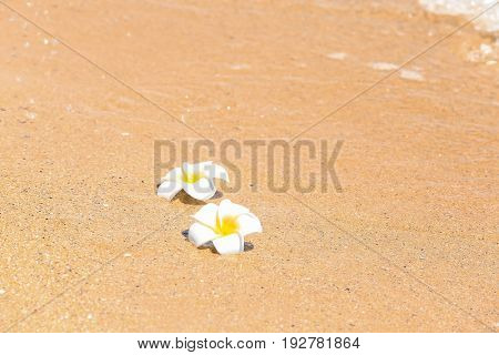 Beautiful tropical flowers at sea shore. Vacation concept