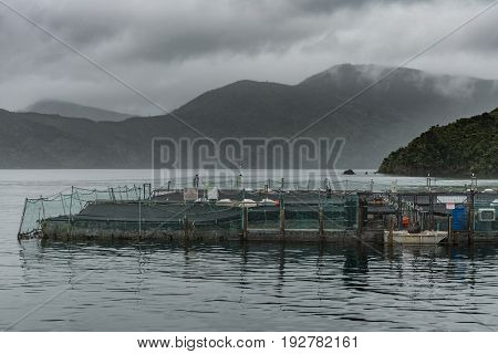 Picton New Zealand - March 12 2017: King Salmon farm in Ruakaka Bay under cloudy sky full of rain. Industrial installation with pens and nets above sea water. Seal trying to get in. Mountains in back.