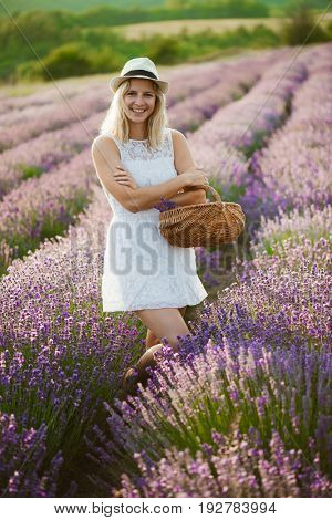 Beautiful woman harvesting lavender