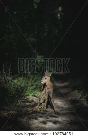 Young lonely, careless deer fawn in forest