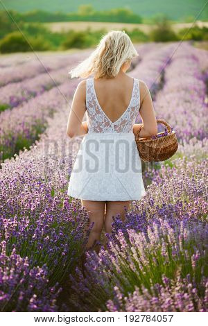 Young woman in lavender filed. Long hair woman walking in lavender field.