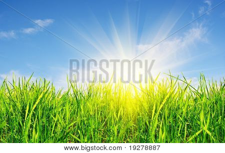 grass, sky and sun