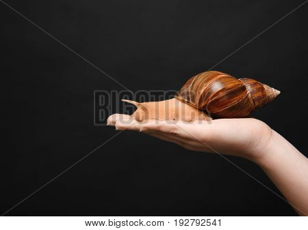 Female hand with giant Achatina snail on dark background