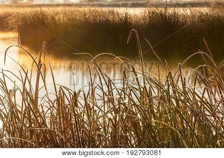 Sunrise on the wetland marshes creates a warm glow as mist rises off the water