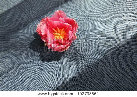 Beautiful bud of pink tulip on wicker mat