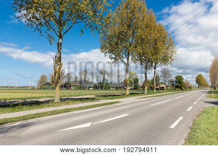 Dutch country road with farmhouses and trees in spring time