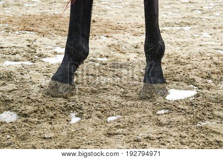 The Horse's Legs. Hooves Of A Horse In The Sand.