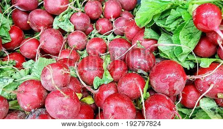 Bunches of fresh raw red radishes from market