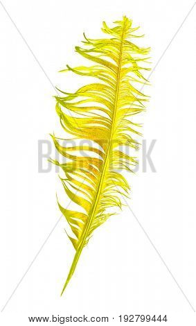 Creative golden feather isolated on white.