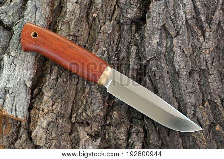 Knife hunting tourist from high- carbonaceous steel