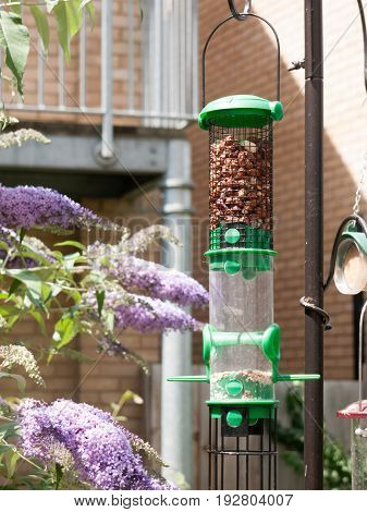 a green big bird feeder close up outside in summer full of peanuts