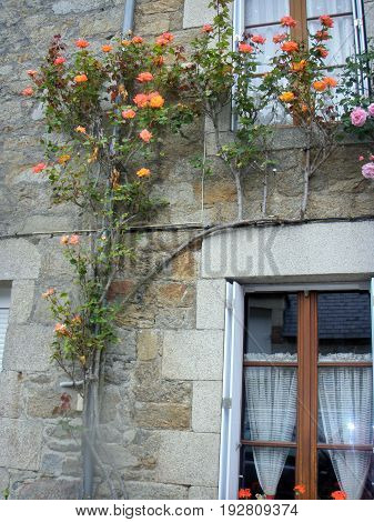 Brittany, France 06 JUNE 2012: The streets of the village. Facades of private houses decorated with flowers.  Brittany, France
