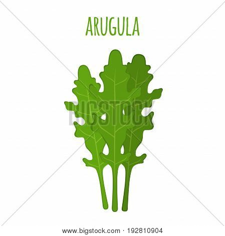 Arugula leaf. Vegetarian green vegetable. Farm market salad. Made in cartoon flat style
