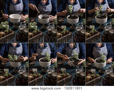 Succulents mini garden planting step by step. Complete consistent story in dark colors