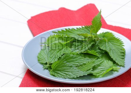 plate of fresh nettle leaves on red place mat - close up