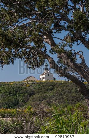 Lighthouse Underneath Tree