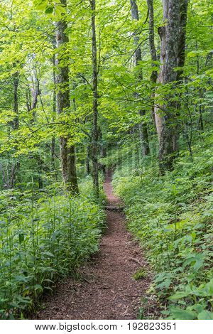 Lush Green Appalachian Trail Headed South