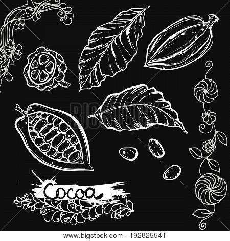 Hand drawn vector illustration set of monochrome cocoa, leaf, bean. sketch. Vector eps 8