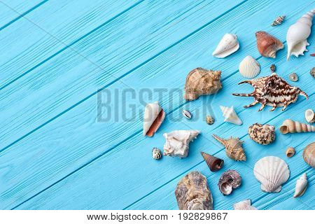 Sea shells, textured blue background. Marine objects from trip on painted table. Still life of little sea shells.