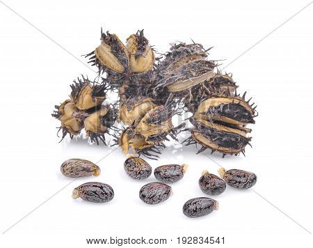 pile of dried Castor Castor bean Castor oil plant with seeds isolated on white background