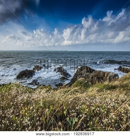 coast with grass in France - Brittany